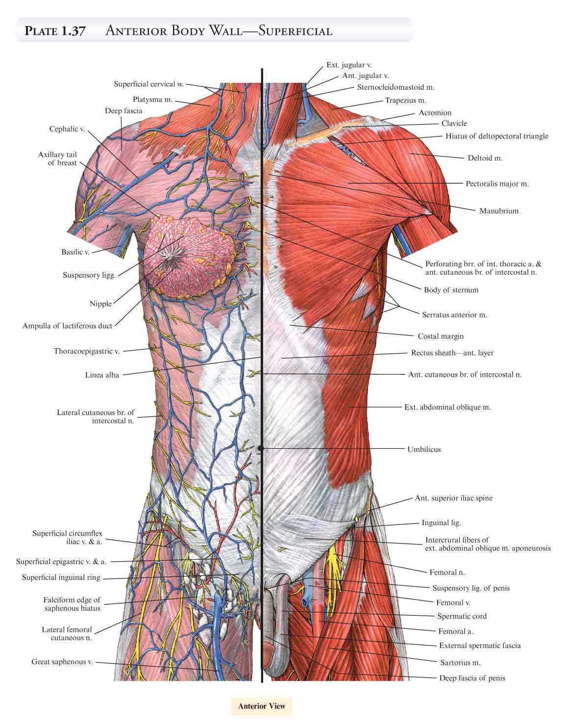 A.D.A.M. Student Atlas of Anatomy Mps-Siam Series on Optimizatio ...