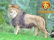 Tickets to Longleat Safari and Adventure Park