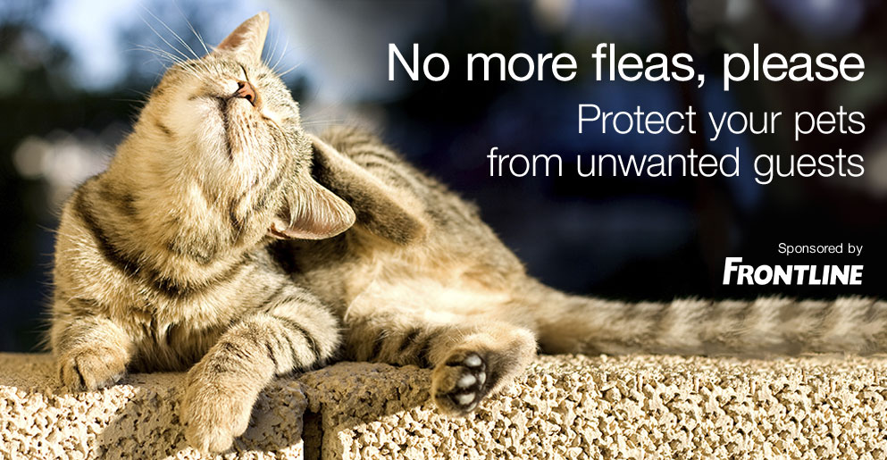 Protect your pet from unwanted guests.