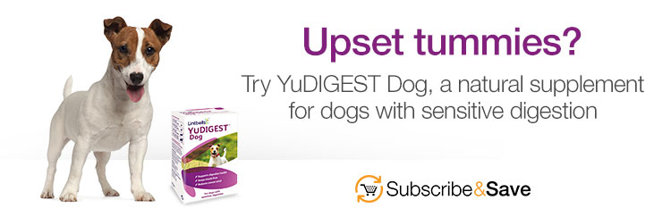 Upset tummies? Try YuDIGEST Dog, a natural supplement for dogs with sensitive digestion