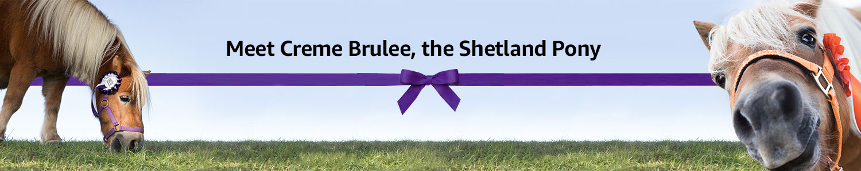 Meet Creme Brulee, the Shetland Pony