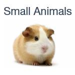 Samall Animals