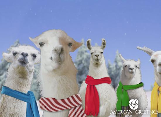 Christmas Llamas Deck the Halls (Animated) - E-mail Amazon.co.uk ...