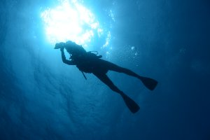 Picture shows a view of a scuba diver taken from underneath and silhouetted against the bright light at the surface.