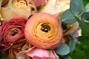 Picture shows a close-up view of roses.