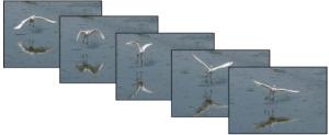 Cattura immagini in movimento con una rapida sequenza di scatti
