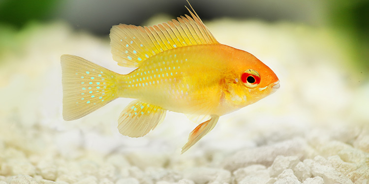 Pet supplies food health supplies and for Fish and more pet store