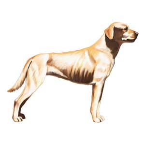 pedigree dog food feeding guide uk