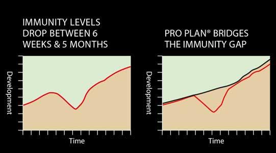 Immunity gap