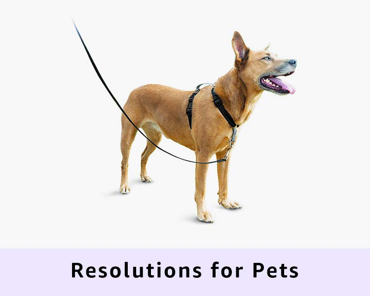 Resolutions for Pets
