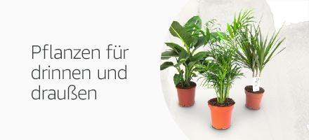 Pflanzen für drinnen und draußen