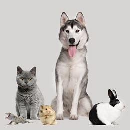 Erstellen Sie ein Profil für Ihr Haustier