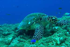 Korallenriff2