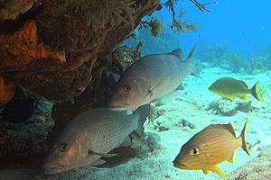 Abenteuer Bahamas
