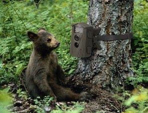 Technaxx Nature Cam TX-9 Überwachungskamera für den Innen- und Außenbereich