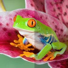 Erleben Sie ganz natürliche Farben mit Triluminos