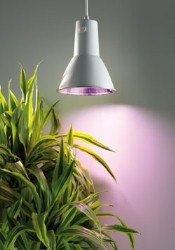 Bio Green LUM 151 Pflanzenlampe L 15