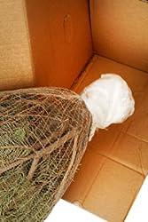 echter weihnachtsbaum nordmanntanne h ca 105 120 cm premiumqualit t garten. Black Bedroom Furniture Sets. Home Design Ideas