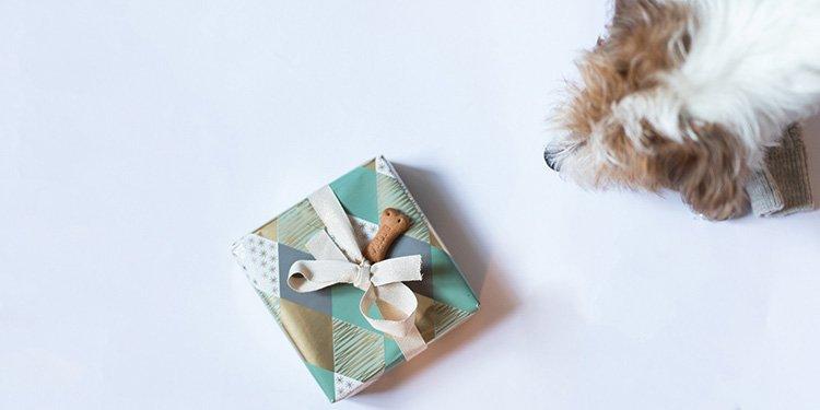 Geschenkefinder für den Hund