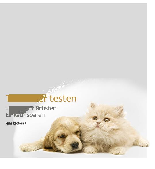 Suchergebnis auf amazon.de für: weiße zaun: garten