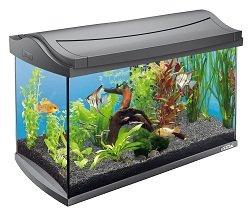 spielzeug aquarium