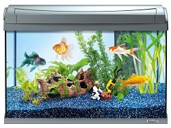tetra 199347 aquaart goldfish aquarium komplett set 60 liters modernes design in verbindung mit. Black Bedroom Furniture Sets. Home Design Ideas