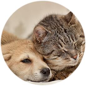 Haustiergeschenke finden