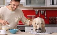 Sans céréales : chiens