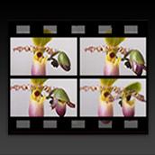 Génération auto de film en Time Lapse