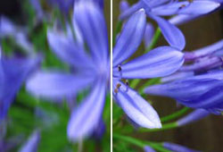 Le stabilisateur d'image numérique garantit des photos nettes et détaillées