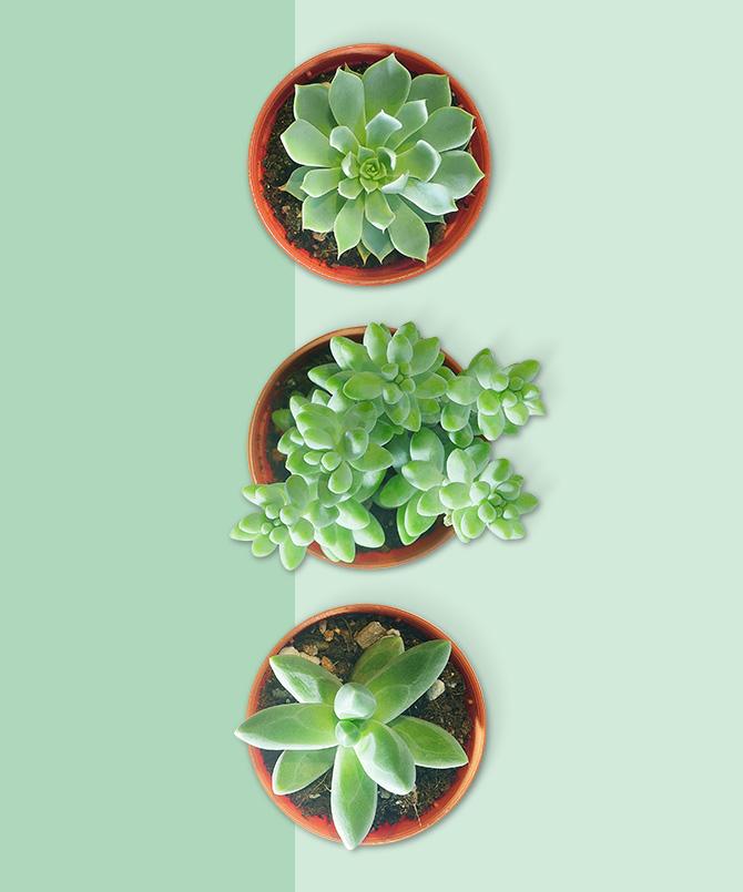 Plantes, graines et bulbes