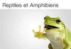 Reptiles & Amphibiens