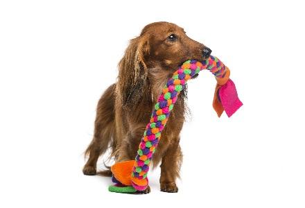 Cani prodotti per animali domestici for Amazon trasportini per cani