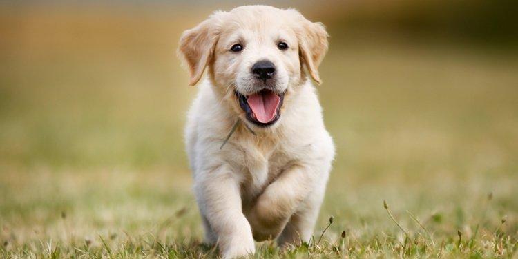 https://images-eu.ssl-images-amazon.com/images/G/29/Pets/Dogs.jpg