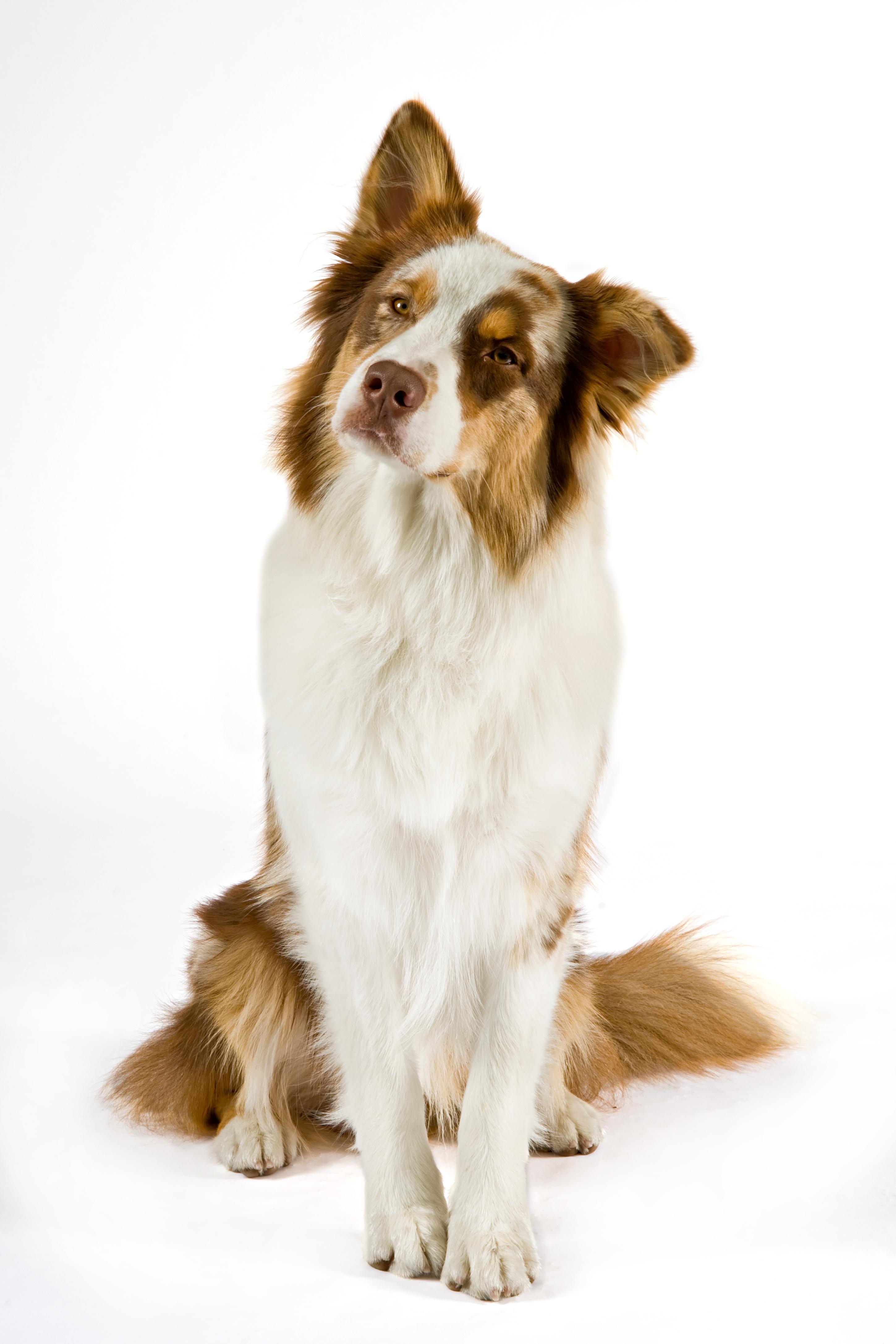 Pet star prodotti per animali domestici for Nuovi piani domestici