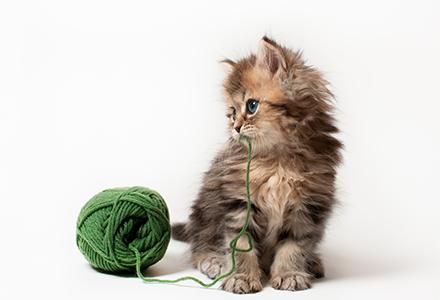 Gatti prodotti per animali domestici collari for Amazon trasportini per cani