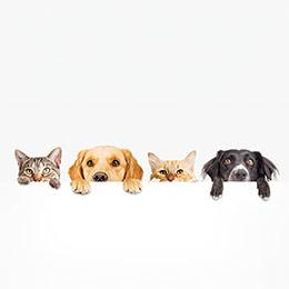 Semana de las mascotas