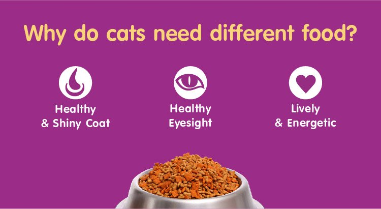 Why do cat need different food?
