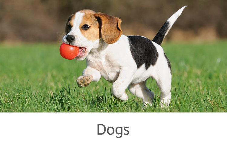 Dog House Pet Supplies Plus