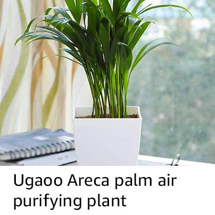 Ugaoo Areca Palm