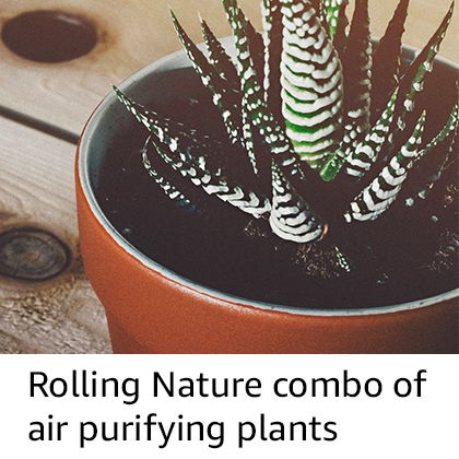 Air Purifying