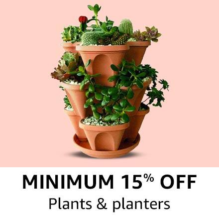 plant & planters