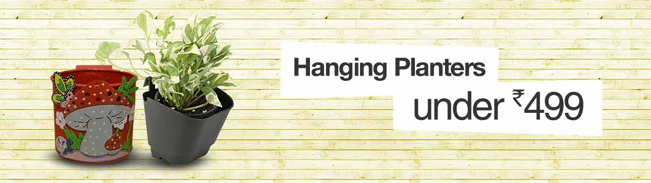 Hanging Planters under Rs. 499