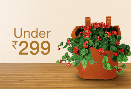 185 & Plant Containers: Buy Plant Containers Online at Best Prices ...
