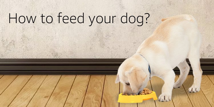 How to feed dog