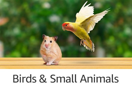 Birds & Small Animals