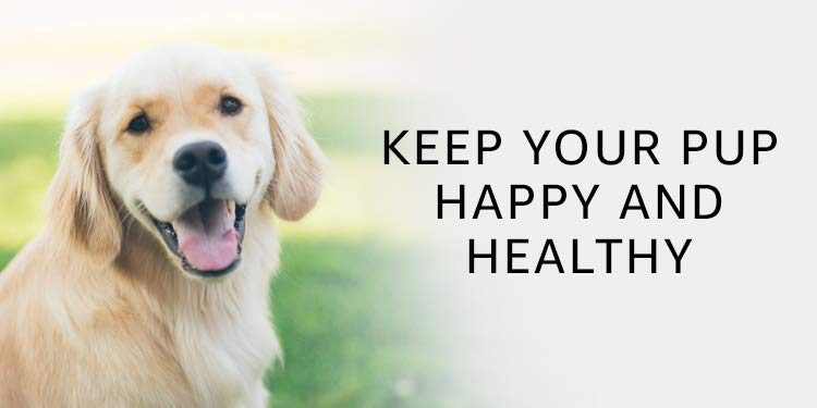Health supplies for your dog