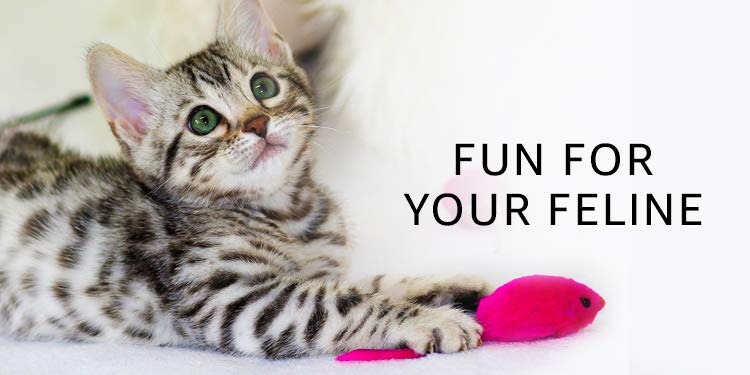 Toys for your cats