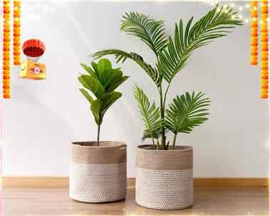 Up to 60% off | Indoor & outdoor planters