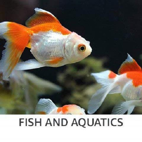 Fish & aquatics